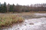 Před odbahněním - nátok do rybníka